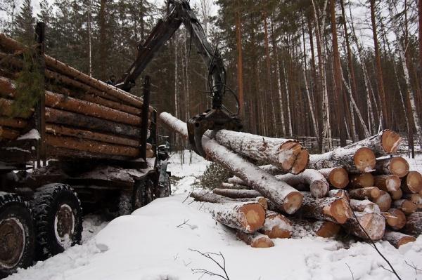 Поставка изделий из вологодского леса по всей России